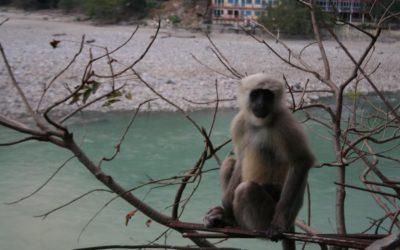 Opičí (ne)klid