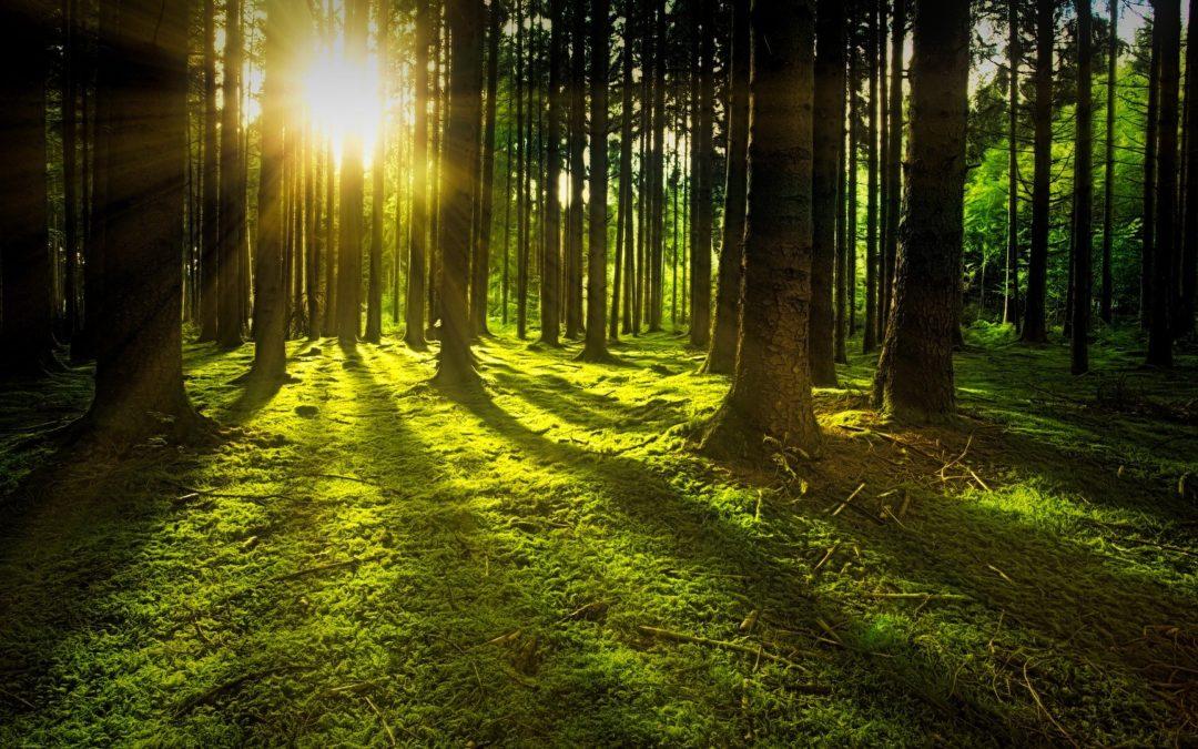 Múladhara a kořeny existence